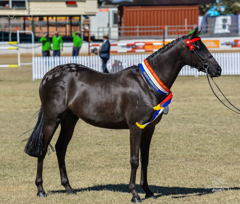 ekka-saturday-arabain-deriv-led-ridden-champ-only-by-lmg-photographics-2-768x651-1934553-wm.jpg